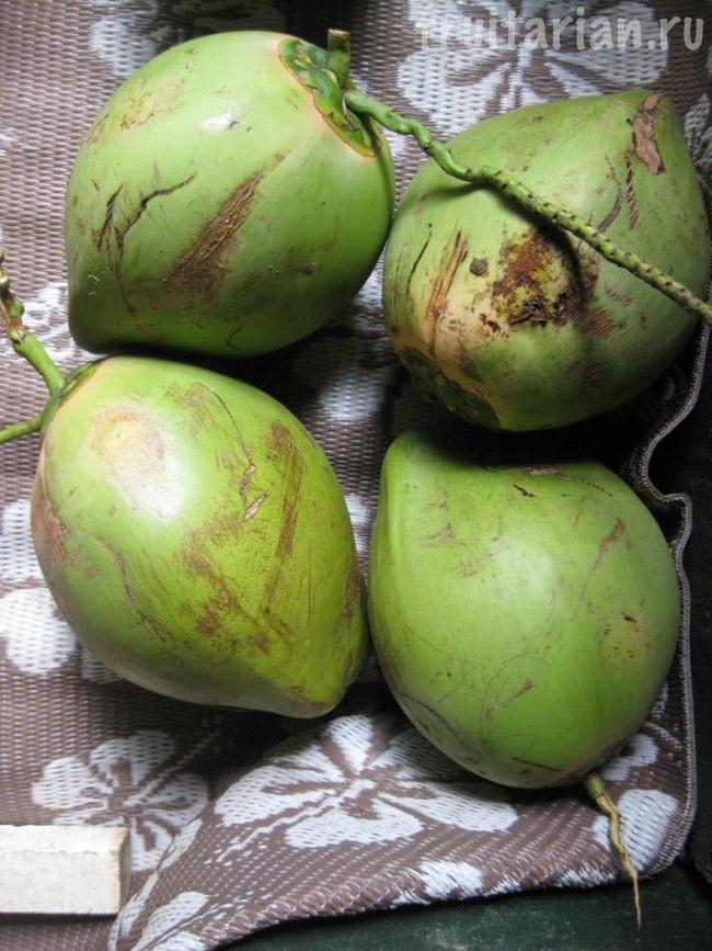 молодые кокосы