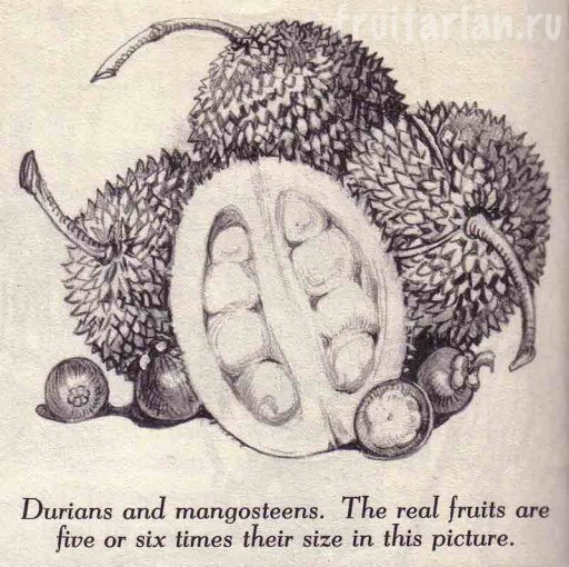 дуриан и мангостины