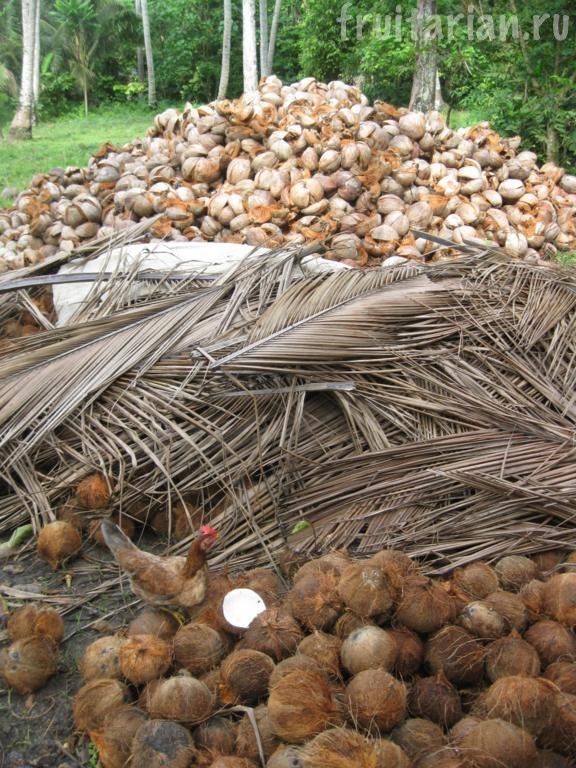 старые кокосы