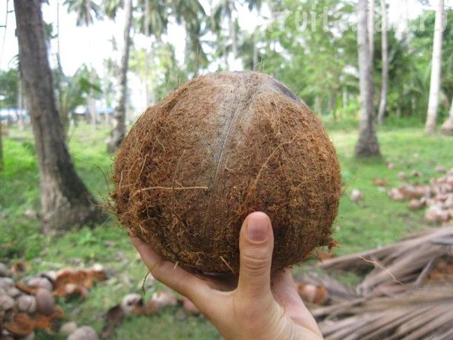 старый кокос