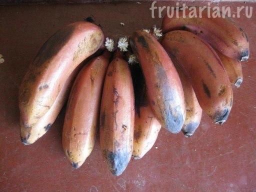 Красные бананы Morado
