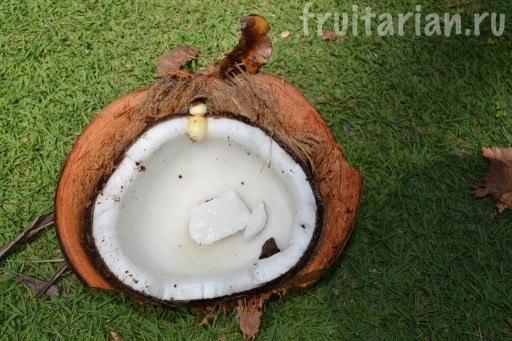 проросток кокоса - Буа