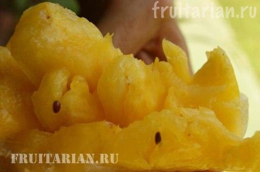 semena-ananasa1