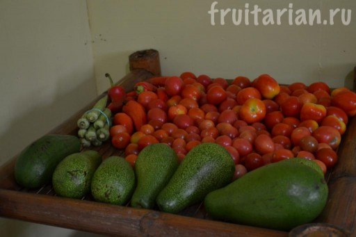помидоры и авокадо