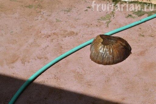 кокосовая щётка