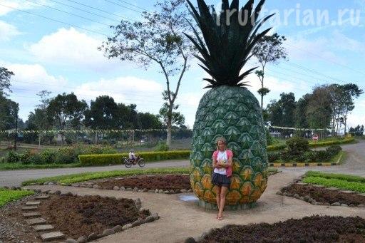памятник ананасу