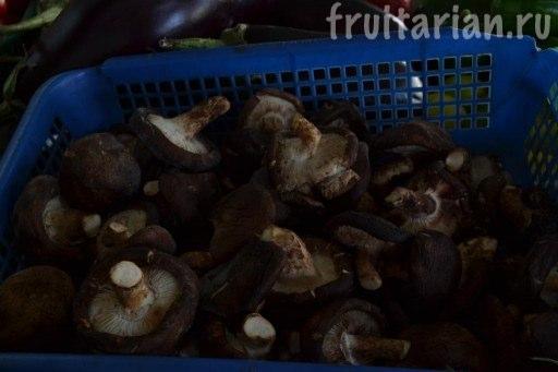 грибы шитаке
