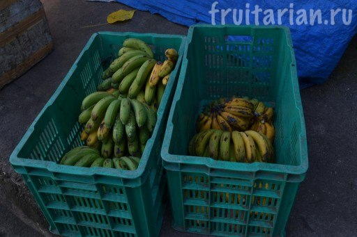 фруктовая база