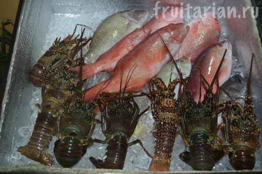 рыба лапу-лапу и лобстеры