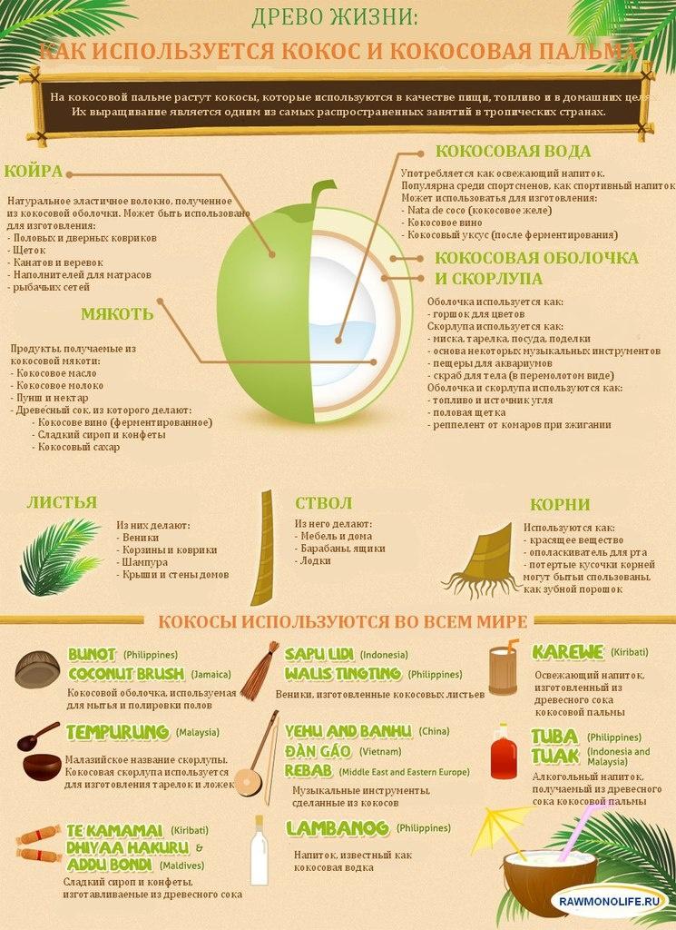 coconuts-info
