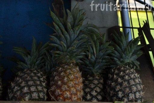 ананасы