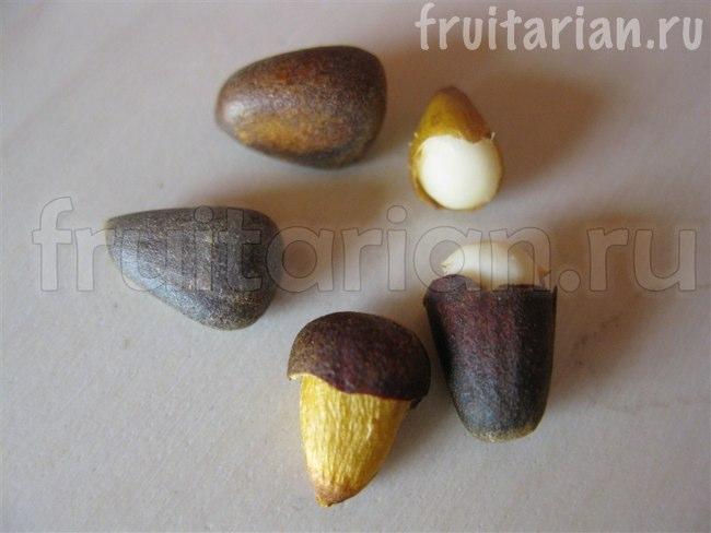 как проращивать кедровые орехи видео