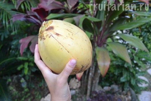 мини кокос