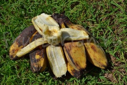 сахарные бананы Кардава