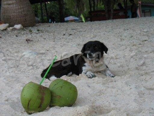 Филиппинские собаки