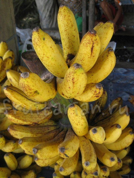 бананы Лакатан