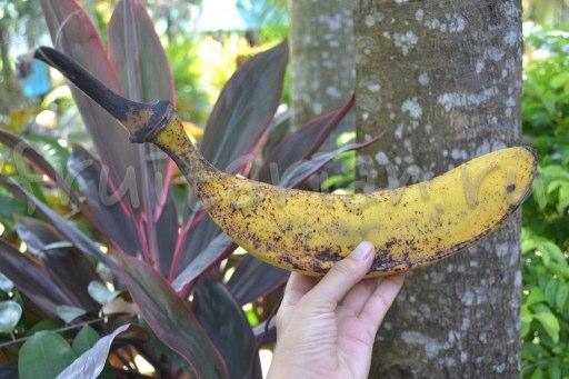 Банан Тиндок