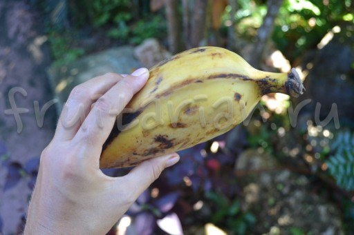 банан Кардава