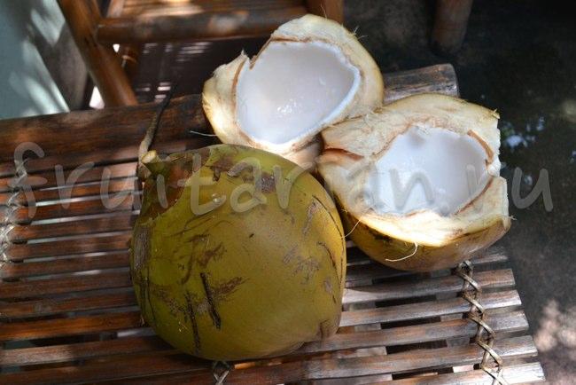 Ядро кокоса