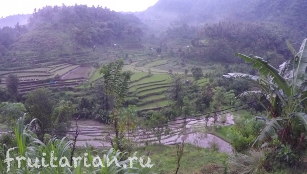 bali-rice-field