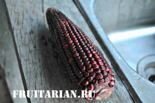 tsvetnaya-kukuruza