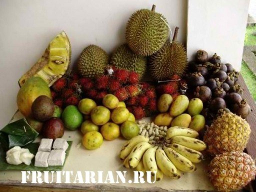 tropical-fruits-01