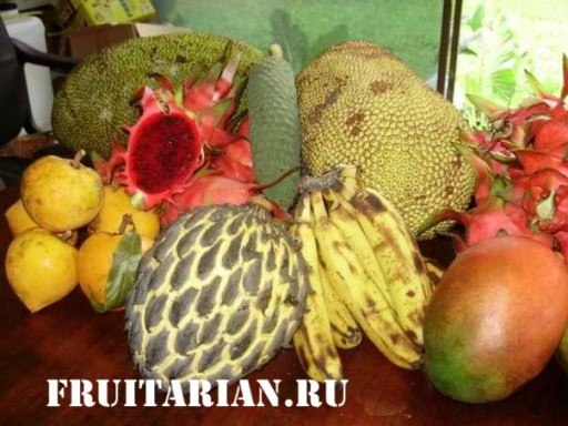 tropical-fruits-03