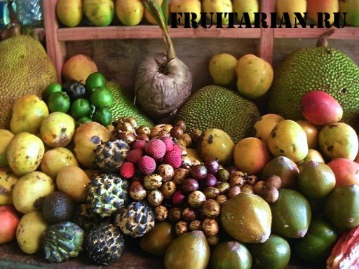 tropical-fruits-09