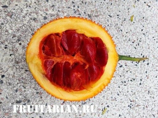 oranjeviy-frukt5