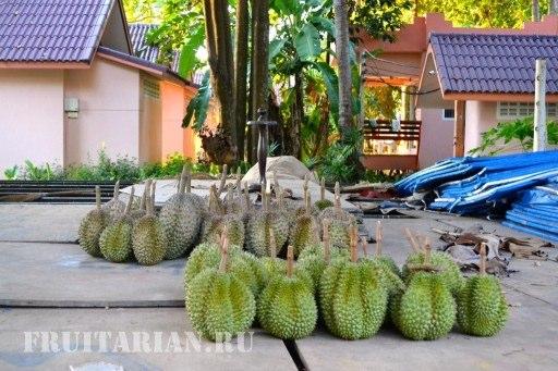 durian-ko-chang