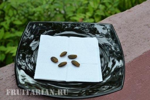 seeds_guyabano1