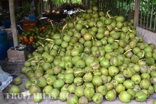 syrye-kokosy