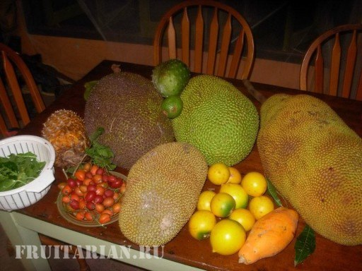 tropical-fruits-15