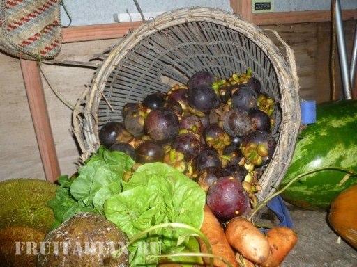 tropical-fruits-17
