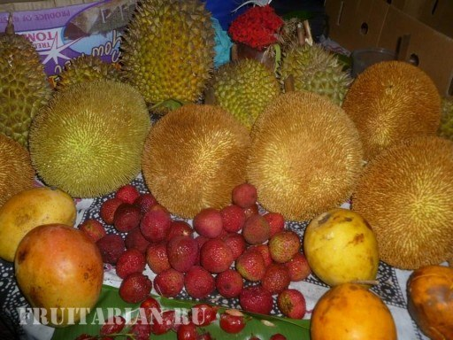 tropical-fruits-23