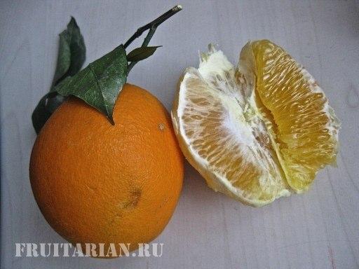 frukty-afrodiziaki-12