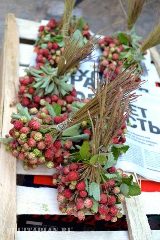 frukty-v-krymu-35