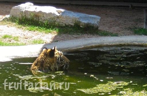 Pattaya_2010_0926