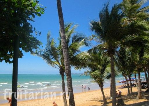 Pattaya_2010_1090