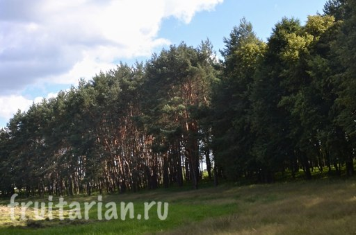 Sumy-forest-21-06-2013