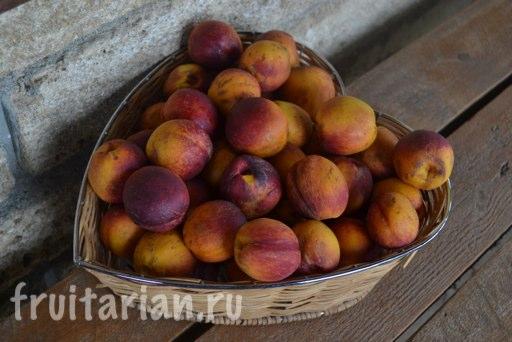 nektarin-bahchisaray