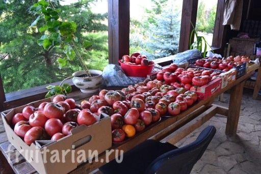 tomato-26-10-2013