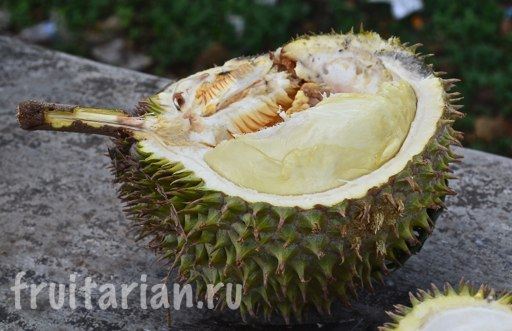 durian-pulau-weh-12