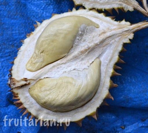 durian-pulau-weh-13