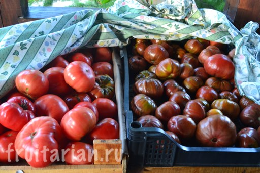 pomidory-v-noyabre