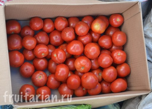 pomidory-toba2