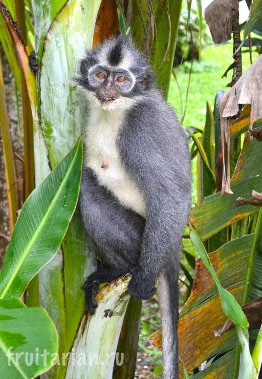 tomas-monkey