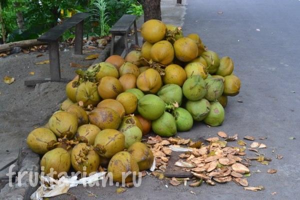 kokosy-indonezija