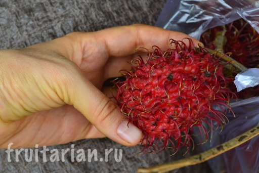 lombok-fruit-season4