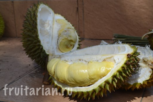 lombok-fruit-season5